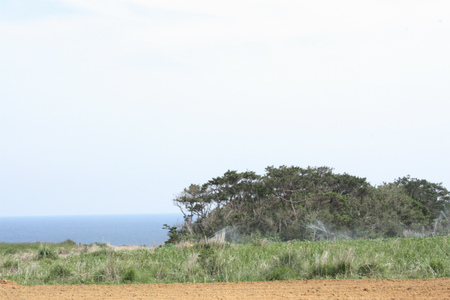 「沖ランs」サイクリングコース見どころ:沖永良部観光: