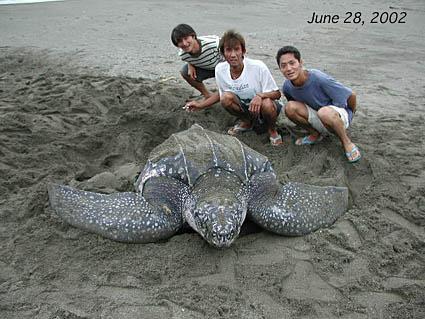 オサガメの画像 p1_19